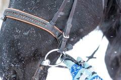 Le mani femminili in guanti tricottati corretti mettono un freno al cavallo nella vittoria Fotografia Stock Libera da Diritti