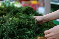 Le mani femminili scelgono il mazzo di aneto in un supermercato immagine stock libera da diritti