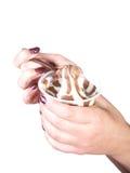 Le mani femminili tengono il cucchiaio con cioccolato Fotografia Stock Libera da Diritti