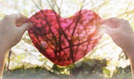 Le mani tengono o sollevano il grande cuore rosso al cielo con il chiarore ed il sole della lente fotografie stock libere da diritti