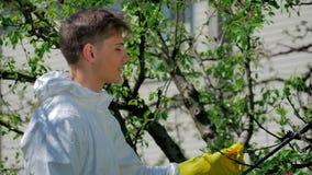 Le mannen som besprutar försiktigt trädet i trädgård arkivfilmer