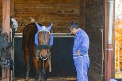 LE MANS, FRANÇA - 30 DE OUTUBRO DE 2016: cavaleiro e cavalo Foto de Stock