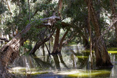 Le marais Photographie stock libre de droits