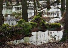 Le marais Images libres de droits