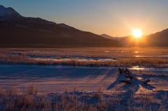 Le marais au lever de soleil Image stock