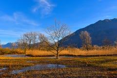 Le marais en automne Image libre de droits