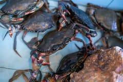 Le marché de fruits de mer de crabe Photos stock