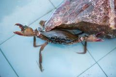 Le marché de fruits de mer de crabe Photo libre de droits
