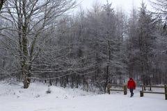 Le marcheur sur une neige a couvert le chemin de pays Photo stock