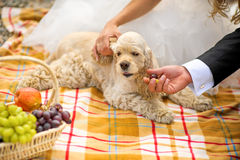 Le marié, la jeune mariée et le cocker de chien un panier de pique-nique Image stock