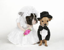 Le mariage Images stock