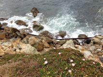 le Marino roccia piante coesistono insieme Immagine Stock Libera da Diritti
