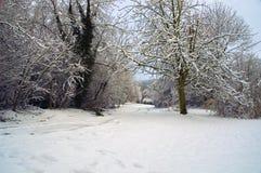 Le Marlow vert Image libre de droits