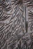 Le Maroc noircissent le marbre noir fossile, plat fossile de roche d'Orthoceras Image stock