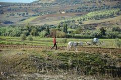 Le Maroc, Volubilis, agriculture Photographie stock