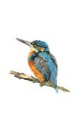 Le martin-pêcheur illustration de vecteur