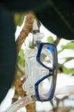 Le masque et la prise d'air bleus accroche sur une branche d'arbre contre le contexte de la mer et de la plage Image stock