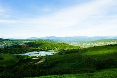 Le matin à la ferme de thé de Cau Dat au lat du DA, le Vietnam photographie stock libre de droits