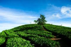Le matin à la ferme de thé de Cau Dat au lat du DA, le Vietnam photo libre de droits