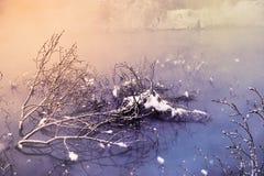 Le matin d'hiver Image stock