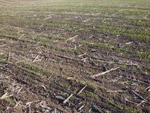 Le matin de fin d'été viole le fond de champ après récolte images stock