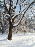 Le matin ensoleillé d'hiver dans la neige a couvert Forest Park public Photographie stock