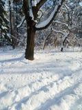 Le matin ensoleillé d'hiver dans la neige a couvert Forest Park public Images libres de droits