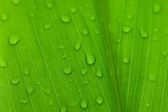 Le matin mouille sur les fleurs tropicales photographie stock libre de droits