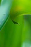 Le matin mouille sur les fleurs tropicales photo libre de droits