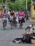 Le matin permutent sur la bicyclette Photos libres de droits