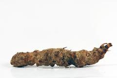 Le medicine di erbe cinesi Fotografia Stock Libera da Diritti