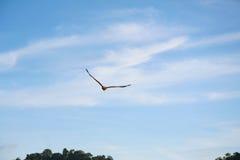 Le meilleur chasseur dans le ciel photo libre de droits