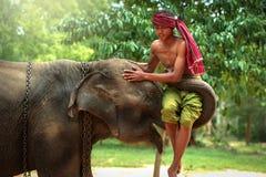 Le meilleur Mahout d'amitié avec l'éléphant Photos libres de droits