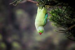 Le meilleur oiseau jamais Image libre de droits