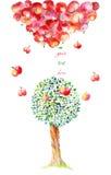Le mele cadono su Immagini Stock Libere da Diritti