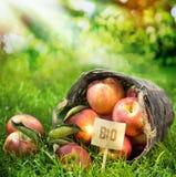 Le mele fresche dell'azienda agricola sana hanno classificato bio- Immagine Stock