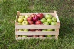 Le mele golden delicious, di nonna e di galà di Smith in agricoltori commercializzano la cassa, Serbia fotografie stock libere da diritti