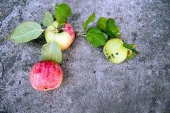 Le mele mature con le foglie verdi si trovano su un fondo concreto immagini stock libere da diritti