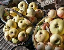 Le mele mature raccolte si trovano in un canestro ed in un secchio fotografie stock