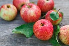 Le mele rosse e gialle raccolgono nel giardino di caduta Fotografia Stock
