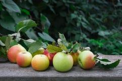 Le mele rosse e gialle raccolgono nel giardino di caduta Immagine Stock