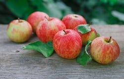 Le mele rosse e gialle raccolgono nel giardino di caduta Immagini Stock