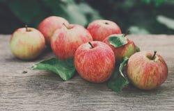 Le mele rosse e gialle raccolgono nel giardino di caduta Immagini Stock Libere da Diritti