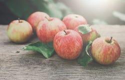 Le mele rosse e gialle raccolgono nel giardino di caduta Immagine Stock Libera da Diritti