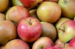 Le mele rosse e verdi impilano, alimento sano e fresco, per la dieta ed il vegano Modello della natura e del fondo fotografia stock
