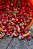 Le mele selvagge Fotografia Stock