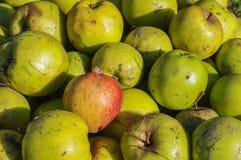 Le mele verdi e rosse del bene inaspettato si chiudono su fondo Fotografie Stock Libere da Diritti