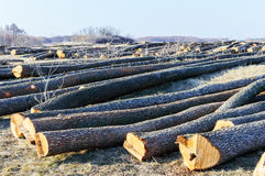 Le mensonge abattu d'arbres au sol Image libre de droits