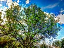 Le mie foglie sono indietro! Fotografia Stock Libera da Diritti