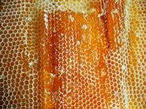 Le miel jaune Image stock
